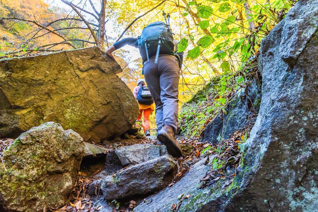 鮮やかな紅葉の登山道